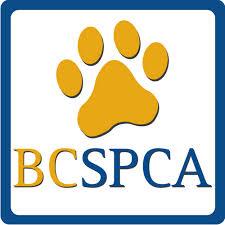 SPCA BC Logo 2